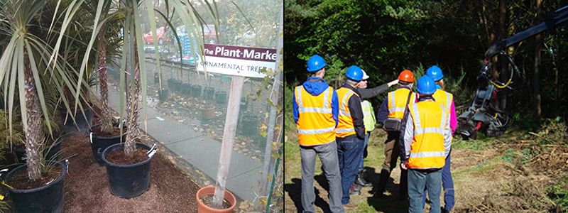 Image on left shows sign displaying ornamental trees and image on right shows forestry professionals discussing management options