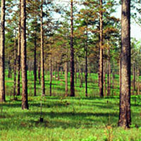 Link to management of forest invasions